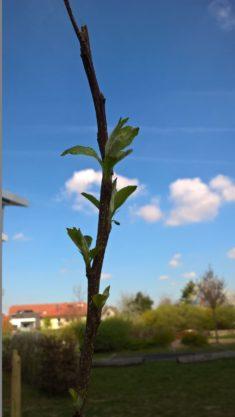 Der Birnbaum und der Apfelbaum machen uns besonders viel Freunde, der Pfirsich hat den Winter le ...