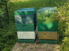 Ausflug der ersten Bienen