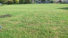 Grünfläche vor der Aktion