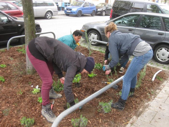 Pflanzung im vollen Gange (2)