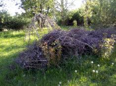 Benjeshecke – Tummelplatz für viele Tiere und Insekten