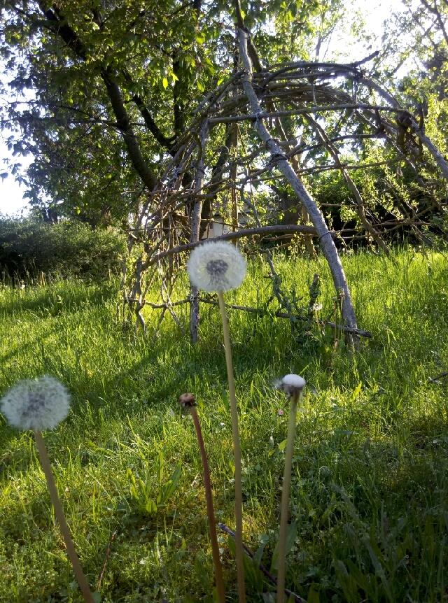 Weidendom in der Wildblumenwiese