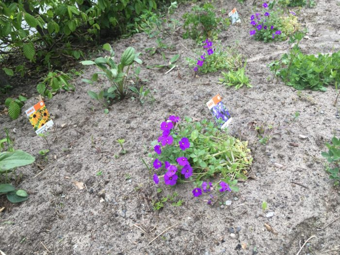 Die ersten Blumen blühen.