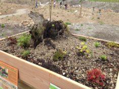 4. Schritt: Die Dachbepflanzung