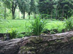 bepflanzte Baumstämme im Luitpoldhain in Lauingen