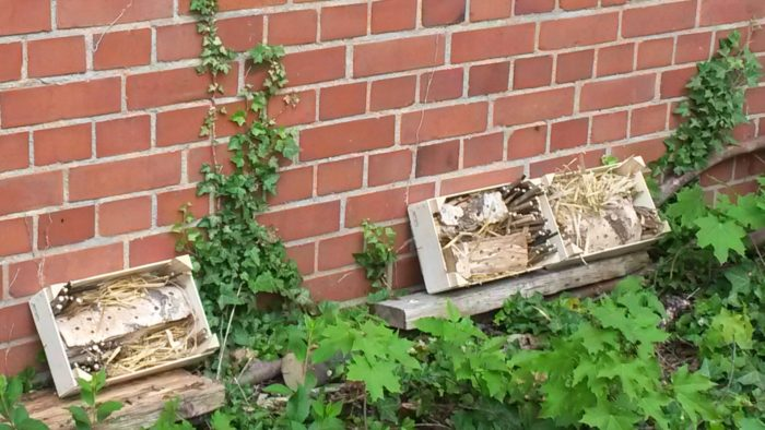 Einige Insektenhotels hier…