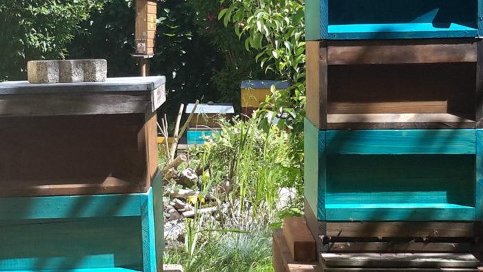 Im Hintergrund der im letzten Jahr angelegte Bienentränketeich mit Totholz. Mittlerweile schön e ...