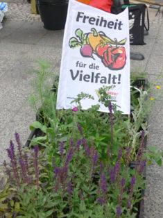 Neben dem Bienenpflanzen sind auch selbstgezogene Grünkohlsamenmit unter den Pflanzen, die an di ...