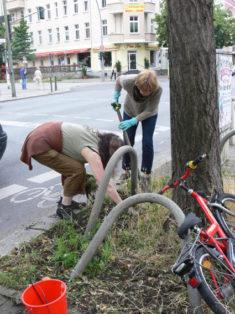 Hier heißt es Hintern einziehen. Baumpaten leben gefährlich!