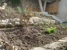 Die Anfang April neu gepflanzten Stauden sind zwischenzeitlich gut angewachsen und erfreuen scho ...