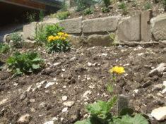 Jetzt gehen immer mehr Blüten von den unterschiedlichsten Stauden auf. Heute war ich leider zu l ...