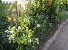 Das Endfoto vom Weg in den Kräutergarten