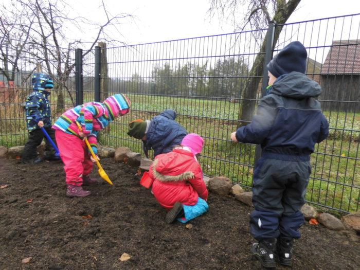 Knollenbepflanzung