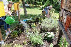 Hitzewelle und Trockenheit im Juni im Schulgarten überstanden.