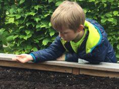 Fleissige kleine Kinderhände verteilen die Samen im Beet.