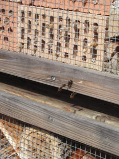 Paarende Mauerbienen auf unserem Insektenhochhaus