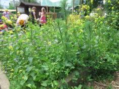Unser bestehendes Wildblumenbeet