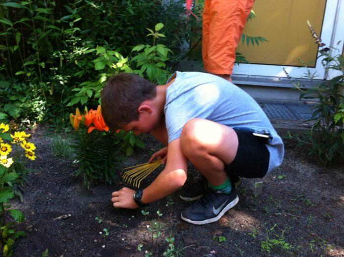 Es wird gepflanzt und gesät (z. B. Lilien, Phaceliasamen).