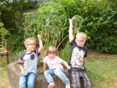 Das Hochbeet der Kita Purzelbaum, bienenfreundlich ausgestattet.