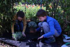 Pflanzaktion im Garten einer Kitafamilie.