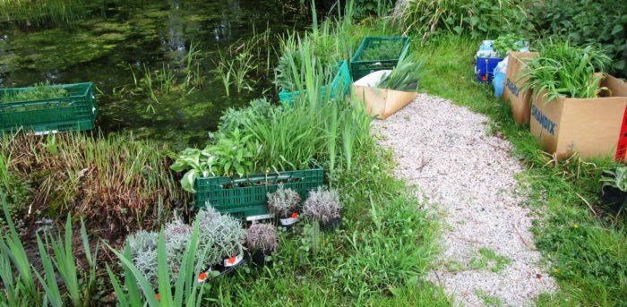 Die gespendeten Pflanzen warten