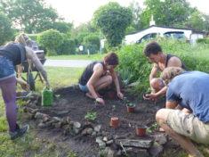 Es wird gepflanzt und gesät im Holunderbusch