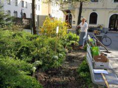 Die Pfarrerin beim Garten