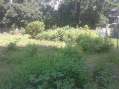 Der ursprüngliche Garten, nachdem wir mit dem Freischneider eine Menge der Himbeer- und Brombeer ...