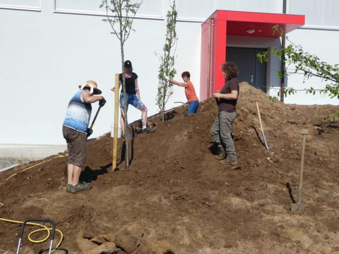 Bäume werden gepflanzt