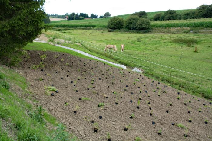 17. Juli: Die Pflanzen sind bereit