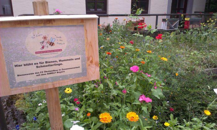 Reger Besuch auf der Bienenweide – leider kein Besuch in den Bienenhotels