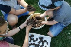 Beim Samenkugeln formen waren alle Kinder mit vollem Einsatz dabei!