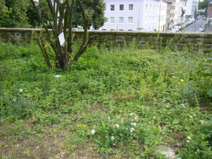 Dies ist der aktuelle Entwicklungsstand unserer Bienen-Ecke. Vielleicht würde es mit mehr Regen  ...