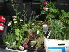 Pflanzenspende