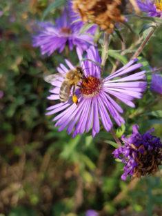 Herbstbienen – karlsbienen