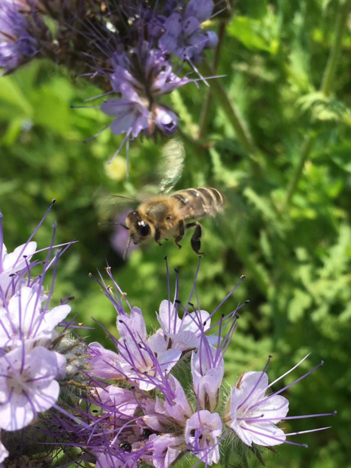 Unsere Biene fliegt los.