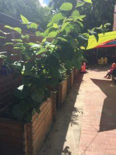 Im Kindergarten Außengelände wurde fleißig gepflanzt.