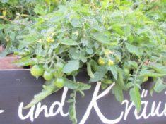 bald können an unserem Gemüse und Kräuterbeet erste Ernteerfolge verputzt werden!