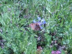 ein Schmetterling erwischt !