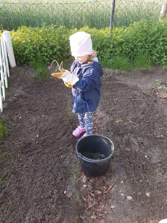 Pflanzen und Beete säubern