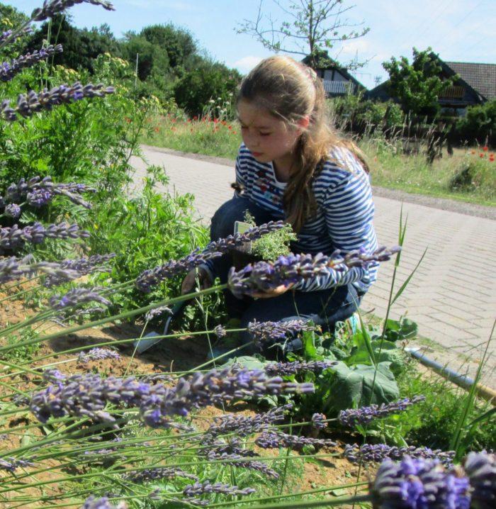 Neue Pflanzen auf der Bienenwiese