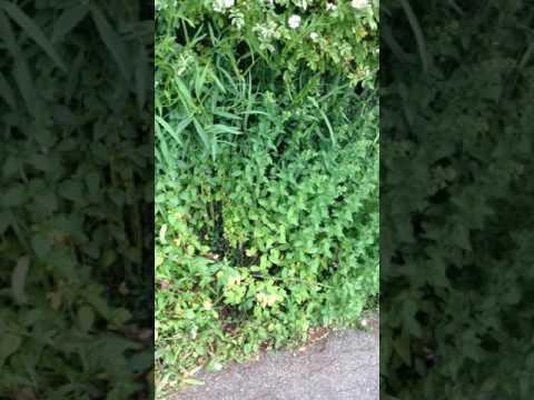 TIPP Juni: sonniger Saum im Hotzenwald-Naturgarten