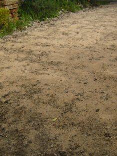 Anlage einer mageren Wildblumenwiese