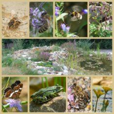 Hortus Fenestram – das Gartenschlupfloch