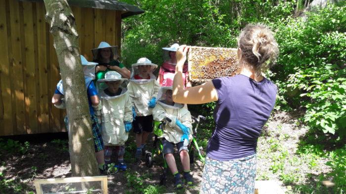 Wie ales begann: In unserer Bienen-AG beobachten wir gerne Bienen…