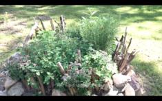 Unsere Kräuterschnecke im Sommersummen