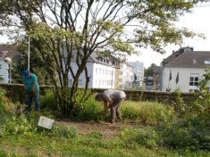 Vorbereitung für die neue Herbstbepfanzung 21.8.2017