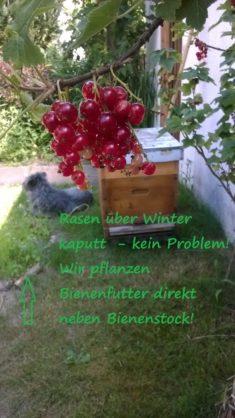 Wildbienen und Honigbienen freuten sich über den Futterpflanzenkreis !
