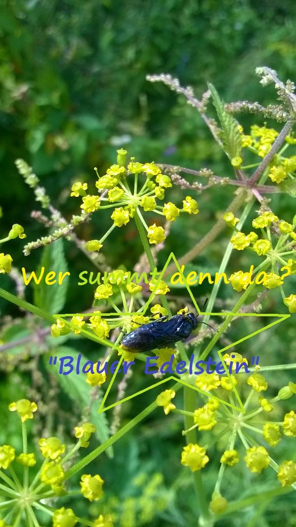 Blauer fliegender Diamant