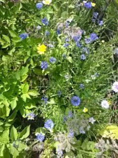 Noch mehr Blumen :-)